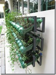 Vertical gardening done with CD racks from IKEA and plastic bottles cut into gardening pots.