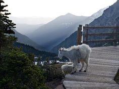 Glacier National Park Best of Glacier National Park, MT Tourism - Tripadvisor Glacier Np, Glacier National Park Montana, Yellowstone National Park, National Parks, Wander, Trip Advisor, The Good Place, Places To Go, Tourism