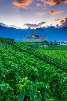 The vineyards of Chateau D'Aigle, Switzerland. Aigle Castle is in the municipality of Eagle of the Canton of Vaud. It is a Swiss heritage site of national significance. Places Around The World, Oh The Places You'll Go, Travel Around The World, Places To Travel, Places To Visit, Around The Worlds, Travel Destinations, Beautiful World, Beautiful Places