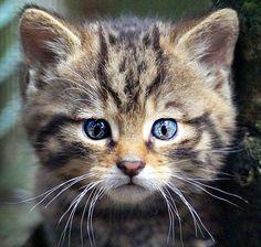pareidolia-cat__605