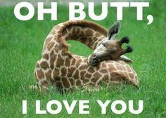 Oh Butt, I love you – Giraffe | Nobody Goes Here