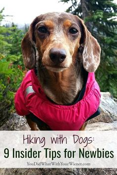 So you've discovered the wonders of hiking with your dog? I've been hiking with my dogs for over 10 years so I can attest to how awesome it is. I can also attest to how overwhelming it can be as a beginner hiker. Hiking Dogs, Hiking With Dog, Thing 1, Dog Care Tips, Pet Care, Pet Tips, Dog Travel, Travel Tips, Dog Training Tips