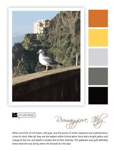 A gabbiano (sea gull) dressed for success! Wildlife influence - Location: Riomaggiore, Italy  - mejudydesign.com