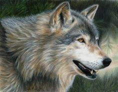 Wolf Art TIMBER WOLF Original Artwork by Carla by CarlaKurtArt, $250.00