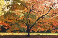 10 Things You Must Do To Your Trees This Fall - http://www.plantsolutionsnj.com/10-things-must-trees-fall/