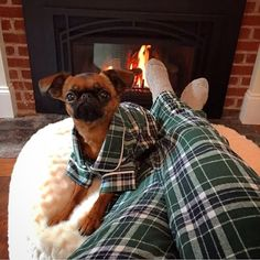The canine clothing company has already sold out of the PJ sets but plans to be restocked on Nov. 25 : The canine clothing company has already sold out of the PJ sets but plans to be restocked on Nov. Big Dogs, Cute Dogs, Funny Dogs, Cute Dog Clothes, Cute Dog Outfits, Dogs In Clothes, Best Dog Toys, My Bebe, Dog Pajamas