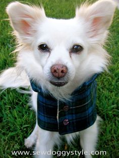DIY Pet Coat Pattern - Sewing it Together!