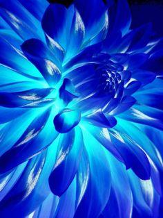 - neon - ☮k☮ Im Blue, Kind Of Blue, Love Blue, Aqua Blue, Blue And White, Cobalt Blue, Image Deco, Neon Flowers, Blues
