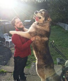 This dog looks the picture of happiness as it hugs its owner with the sun drenching his fa...