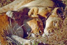 Sisters, Kruger National Park, South Africa