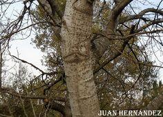 El ojo del árbol