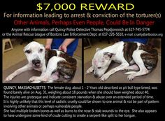 Please help find who did this to Kiya. This evil person will do this to more animals and humans if we don't find them and put a stop to this.