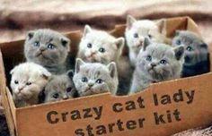 Crazy cat lady starter kit ( box full of kittens animals cat animal kittens kitty animal pictures ) Baby Animals, Funny Animals, Cute Animals, Small Animals, Cute Kittens, Cats And Kittens, Persian Kittens, Crazy Cat Lady, Crazy Cats