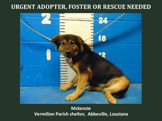 MCKENZIE located in Kaplan, LA has 1 day Left to Live. Adopt him now!  ADOPTED  1-5-15