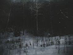 The Schwarzwald, or Black Forest.