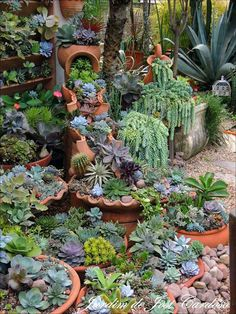 succulents beautifully combined to form a lush garden., Containers of succulents beautifully combined to form a lush garden., Containers of succulents beautifully combined to form a lush garden. Small Front Yard Landscaping, Succulent Landscaping, Succulent Gardening, Cacti And Succulents, Planting Succulents, Backyard Landscaping, Container Gardening, Landscaping Ideas, Succulent Rock Garden