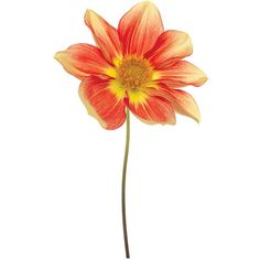 """Universal Lighting and Decor Red Yellow Dahlia 48"""" Wide Glass Wall Art ($300) ❤ liked on Polyvore featuring home, home decor, wall art, flowers, fillers, yellow, glass flower stems, glass home decor, glass wall art and spring home decor"""
