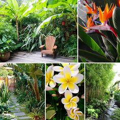 It's time to go troppo in the garden!! You don't need to escape to a tropical island to escape the pressures of life when you have a resort style garden in your own backyard!