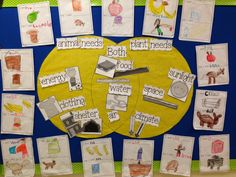 Chalk Talk: A Kindergarten Blog: Basic Needs | Plants and Animals