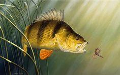 Usa Fishing, Trout Fishing, Fishing Stuff, Fishing Tips, Fishing Lures, Bass Fishing Pictures, Fishing Photos, Fish Artwork, Fish Paintings