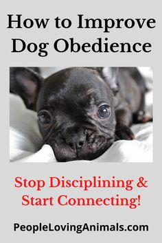 How to Improve Dog Obedience - Stop Disciplining and Start Connecting Dog obedience tips, dog obedience training, dog obedience at home, dog training obedience tips, dog training obedience, puppy obedience tips, puppy obedience training, Dog Training, Puppy Training Puppy Toilet Training, Puppy Potty Training Tips, Dog Training Videos, Puppy Biting, Aggressive Dog, Puppy Housebreaking, Pet Lovers, Bulldog Puppies