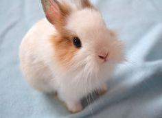 animales tiernos fotografias tumblr - Buscar con Google