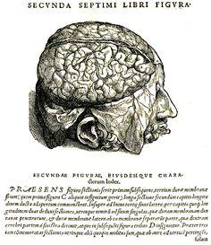 Libro 'De humani corporis fabrica' de Andres Vesalio 1543