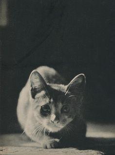ebano porno stella gattino