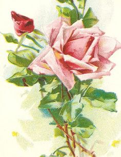 Antique Images: Free Image of Pink Roses: Antique Book of Poetry
