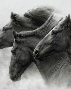 Horse Art Print featuring the photograph Wild Hearts by Ron McGinnis