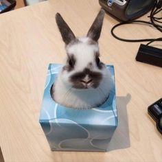 Pinterest: @Bunnybearxo
