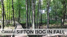 Sifton Bog is a nature oasis within the city of London in southwestern Ontario. It is a favourite spot for short walks and nature observation. Central Europe, London City, Travel Guides, Cemetery, Family Travel, Ontario, Places To See, Travel Photos, Travel Inspiration