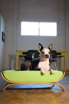 Case Study Pet Bed from Modernica - Dog Milk