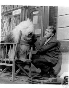 British singer Billy Fury with a beautiful Old English Sheepdog, 1960s