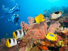 Go deep under the sea and explore the world's largest reef system on a scuba trip to Australia's Great Barrier Reef, one of the world's seven natural wonders.