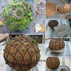 jardinera en macetas This Succulent Sphere DIY is easy when you know how and you are going to love the stunning results. We've included a video tutorial too. Succulent Gardening, Garden Plants, Container Gardening, Indoor Plants, Organic Gardening, Vegetable Gardening, Potted Plants, Hanging Succulents, Succulents In Containers