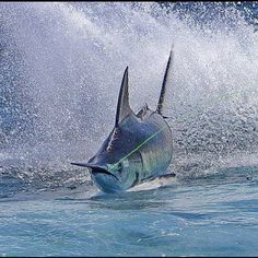How To Get Started With Salt Water Fishing. Photo by Ricardo's Photography (Thanks to all the fans! Fishing Life, Sport Fishing, Fly Fishing, Fishing Shop, Cool Fish, Big Fish, Salt Water Fish, Salt And Water, Marlin Fishing