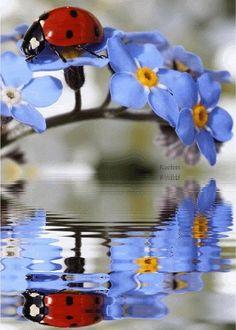 ollebosse:  Красивые | Прекрасные Образы