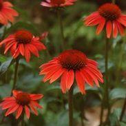 Garden Crossings Mobile Plant Browser