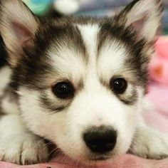 I wish this pup was mine!