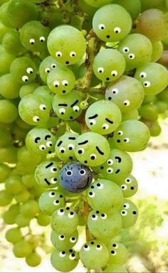 ༺ Beautiful ~ Inside and Out ༻ Emoji Images, Funny Images, Funny Photos, Funny Fruit, Art Mignon, Miniature Photography, Funny Phone Wallpaper, Strip, Funny Illustration