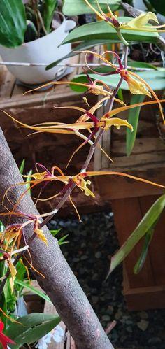 Plant Hanger, Flowers, Plants, Home Decor, Flora, Interior Design, Royal Icing Flowers, Home Interior Design, Floral