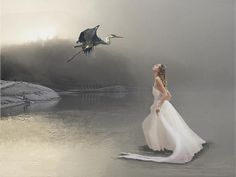 By Maureen Tillman - Stunning great blue heron takes off in flight from the water as the fog rises, startling a beautiful blonde woman wearing a white evening gown as she wades in the shallow water.