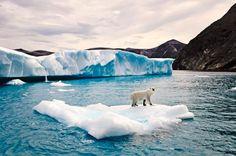 Polar Bears and Glaciers of Baffin Island | Arctic Kingdom