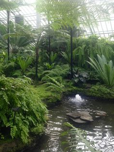 What Is a Conservatory? Tropical Landscaping, Tropical Garden, Tropical Plants, Back Gardens, Outdoor Gardens, Landscape Design, Garden Design, Garfield Park Conservatory, Ferns Garden