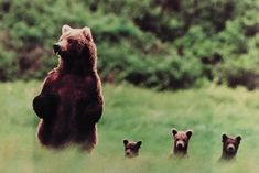 This is too adorable!! Bear family!