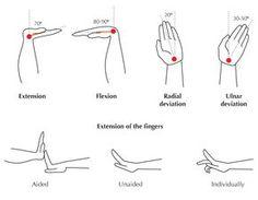 flexion, extension, dorsiflexion, plantar flexion