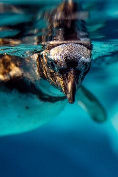 Perfect day for a swim   Photo by Anton Privalov