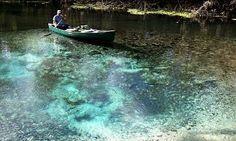 """The Springs of the Ocklawaha River, Florida: Rodman Dam to Eureka Dam - """"Ocklawahaman"""" Paul Nosca"""