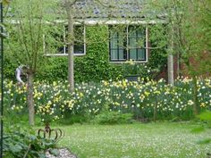 Plant a gopher moat of Narcissus/Daffodil to keep pests away -- Thousands of varieties and cultivars are available from both general and specialist suppliers. They are normally sold as dry bulbs to be planted in late Summer and Autumn (Fall).